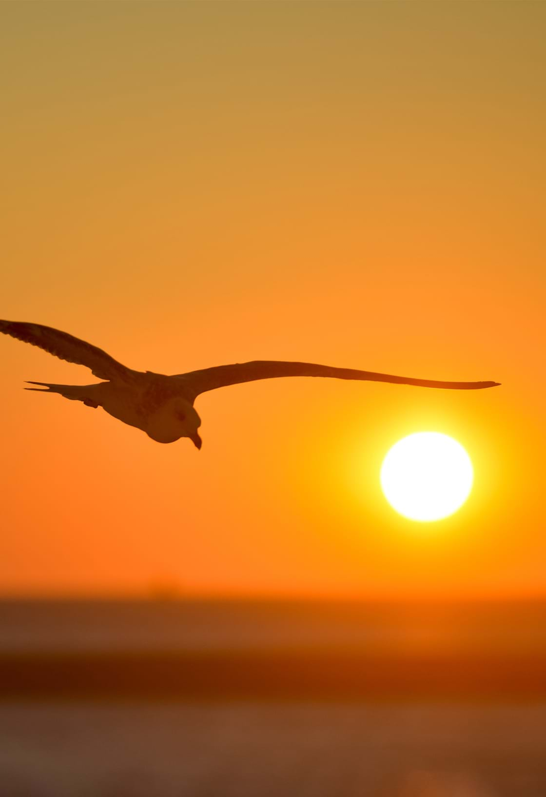 image of a flying bird and sunset